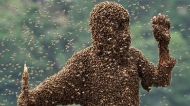 thousands-of-bees-attack-a-mosque-in-arizona-leaving-dozens-of-muslims-injured
