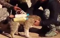 disturbing-footage-of-iraqi-rebels-disarm-isis-suicide-vest-from-puppy